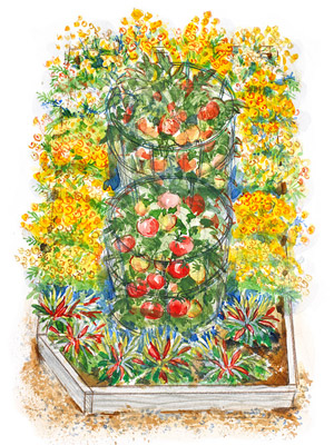 small space vegetable garden plan - Flower And Vegetable Garden Ideas