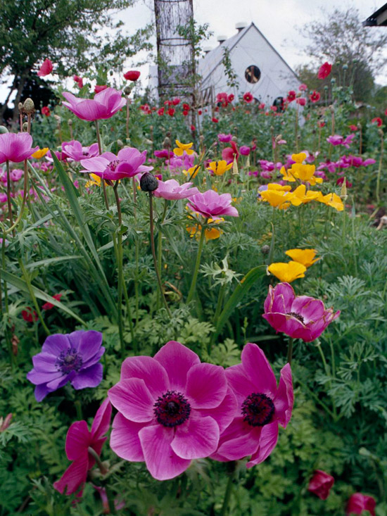 Perfect Pink And Purple Plant Combinations