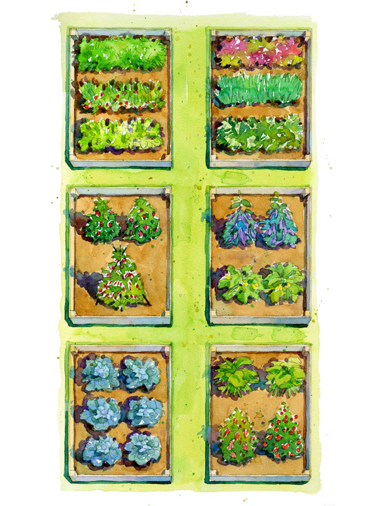 Bountiful buffet vegetable garden plan for Planting a small vegetable garden layout