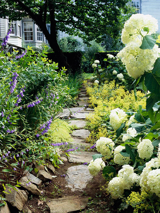 Beautiful green and white plant combinations for Planting schemes for small gardens