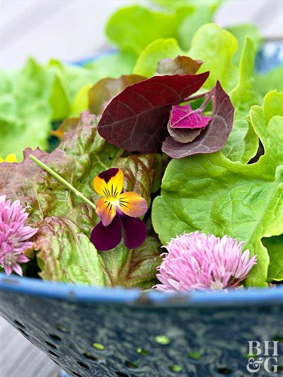 Top Plants for Your Vegetable Garden for Homegrown Salads – What to Plant in Your Vegetable Garden