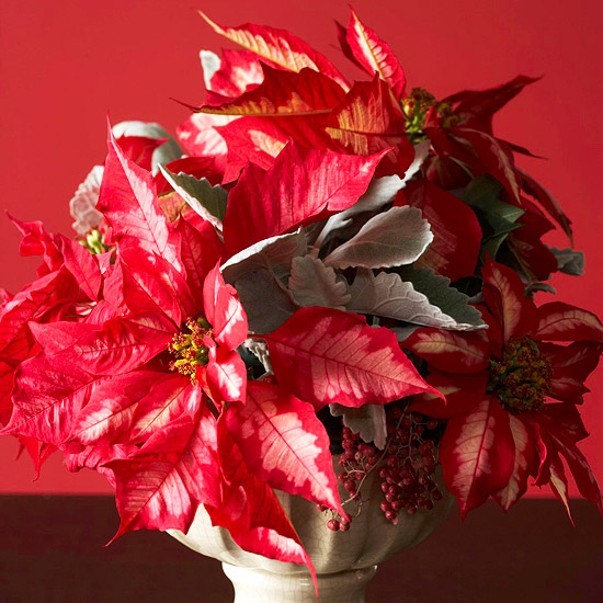 Using Poinsettias as Cut Flowers