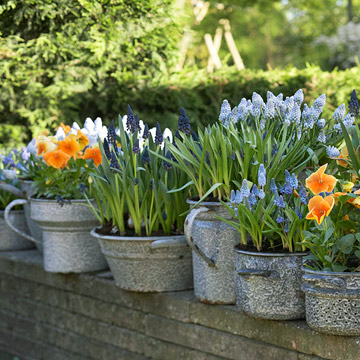 Grow Bulbs in Containers