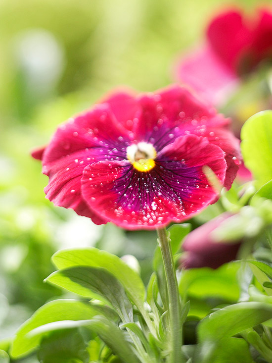 21 Spring Flowers for Your Garden