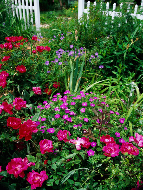 Unforgettable red and pink garden combos Red and pink colour combination