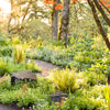Plant a Wooded Wonderland