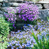 Rock Garden Color Combinations