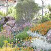 Drought-Tolerant Rock Garden