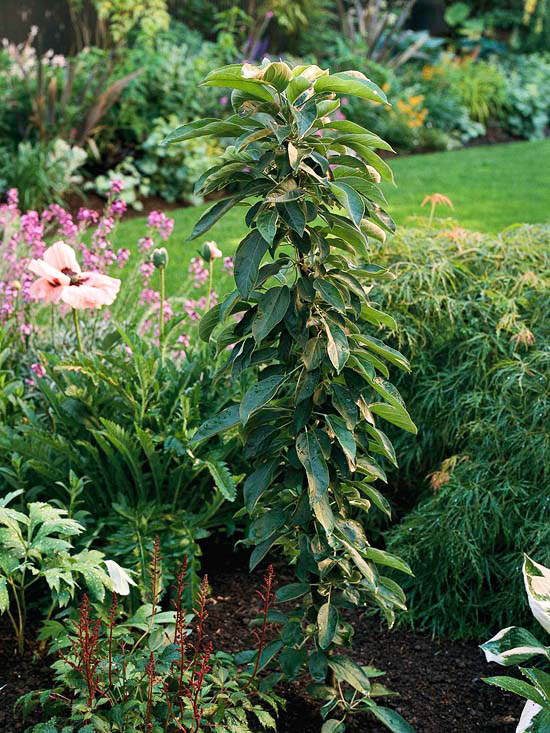 Wonderful Top Fruit Trees For Pacific Northwest Gardens