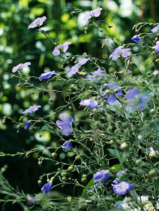 Best Plants for Butterflies in the Mountain West and High Plains