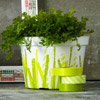 No Plain-Jane Planters