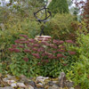 Mix Shrubs with Perennials