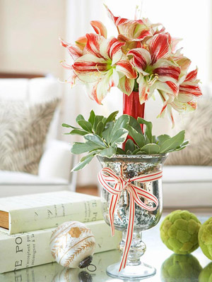 Amaryllis Care and Decorating Ideas for Christmas from Better ...