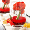 Amaryllis-and-Cranberries Centerpiece