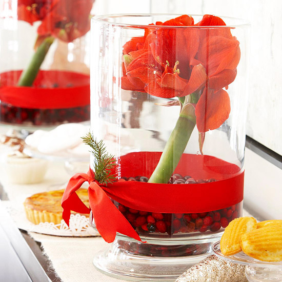 Amaryllis care and decorating ideas for christmas from for Amaryllis christmas decoration