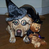 Hairy Potter Dog Costume