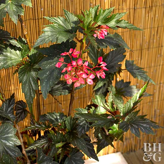 tropical flowers for your patio, Beautiful flower