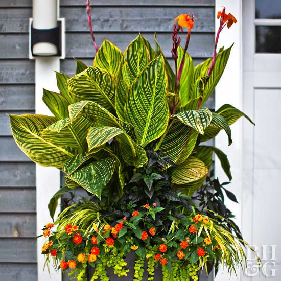 Tropical Flowers for Your Patio