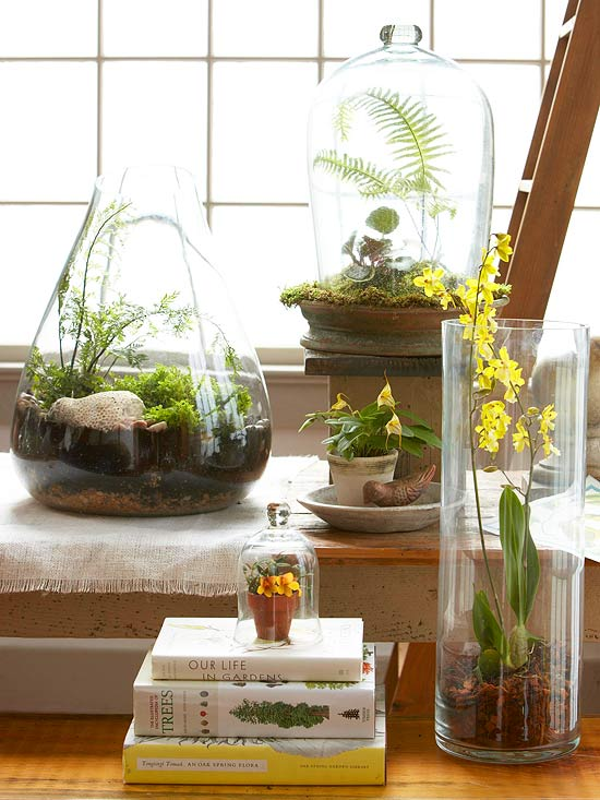 Easy Terrariums