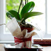 Decorative Orchid Flowerpot