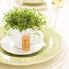 Potted Plant Teacup Favors