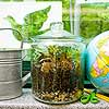 Make a Nature Terrarium