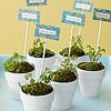 Plant Party Favors