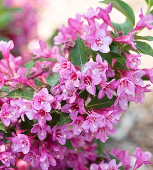 Flowering shrubs by season - Fall landscaping ideas a mosaic of colors shapes and scents ...