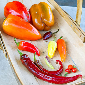 How to Seed a Pepper