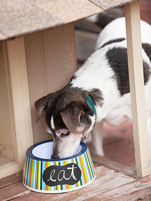 Mealtime Basics for Dogs
