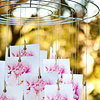 Outdoor Flower Photo Display