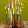 Cattails Centerpiece