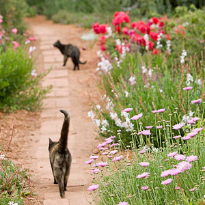 How To Prevent Cats From Garden Best Cat Wallpaper Collection 2017