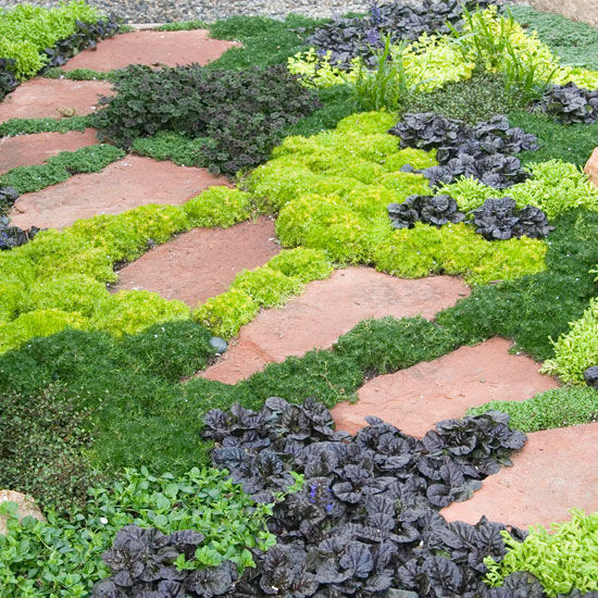 great groundcover plants  bhg  better homes and gardens, Natural flower