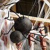 Creepy-Crawly Spider Decoration