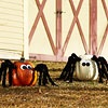Spider Pumpkins