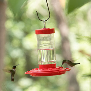 Donu0027t Substitute Sugar With Honey In The Hummingbird Feeder Recipe; The  Solution Spoils Quicker And May Contain Bacteria That Can Cause A Fatal  Fungal ...