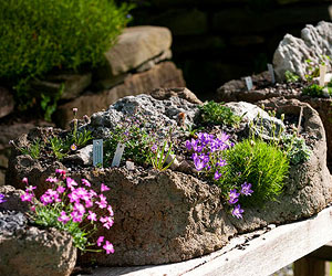 Hypertufa Trough Garden Ideas