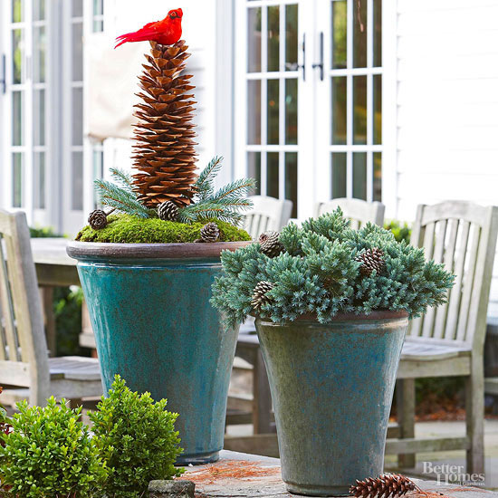 Sugar Pinecone Potted Container