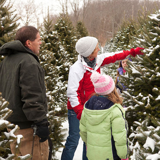 How to Choose Which Christmas Tree is Right For You