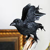 Raven Decoration