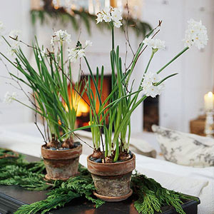 Growing Paperwhites -- Just Add Water