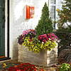 Get Seasonal Color with Containers: Autumn