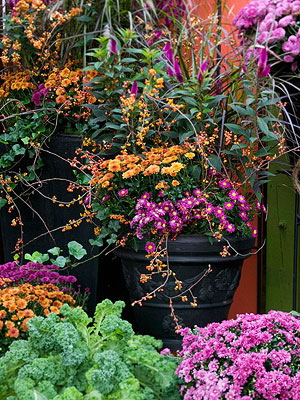 Fall Mums: Your Ultimate Care Guide