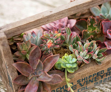 Be Inspired: Clever Container-Gardening Ideas