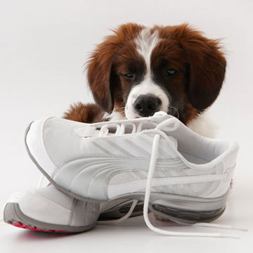 Get Fido in Line: Dog-Training Videos