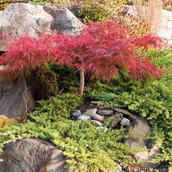 Types of japanese maples 28 images types of maple for Xpression hardwood floors