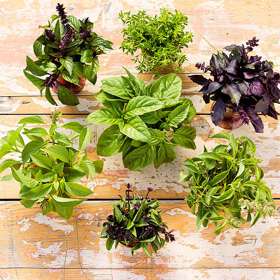 Herb substitutes - Tips planting herbs lovage parsley dill ...