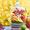 Glass Cloche Fall Display