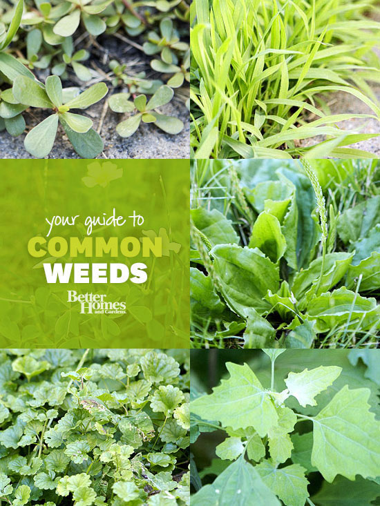 Weed identification guide for Garden of weed